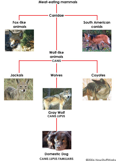 Evolution Vegan Dog Food