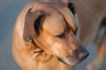 D5DOG & Meat Madness dog, Rudy. Photo by Matt Magana
