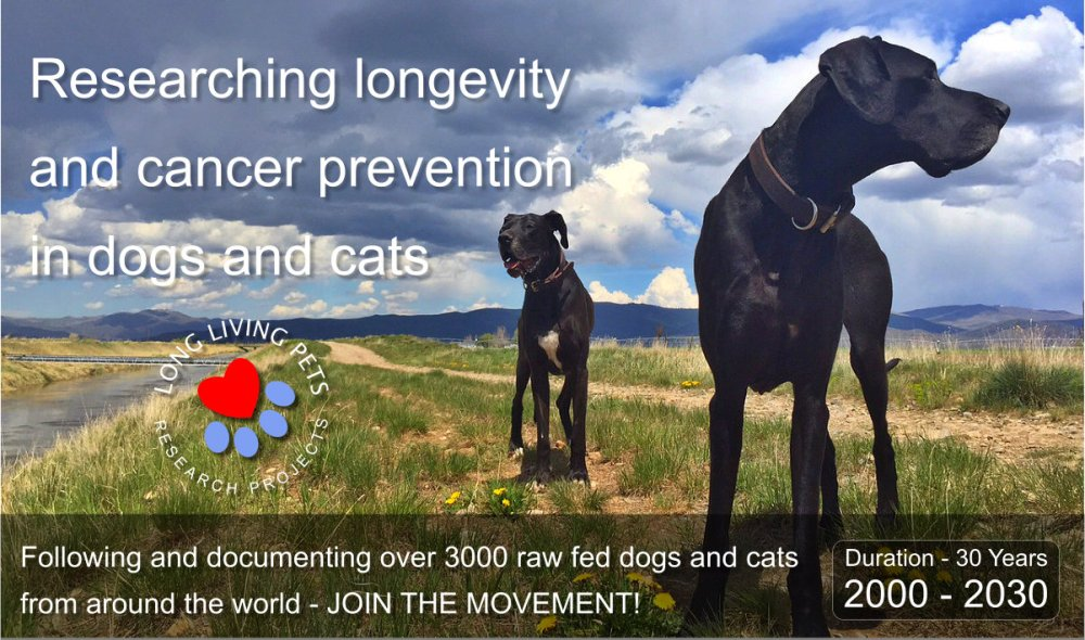 long-living-pets-website-main-banner-1
