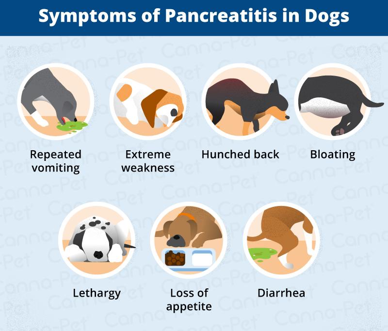 cp_pancreatitis_4