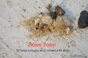 bonepoop