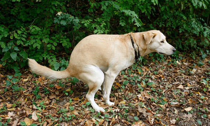 Perfect Canine Poop: Q&A: What's a Normal Stool for a Raw