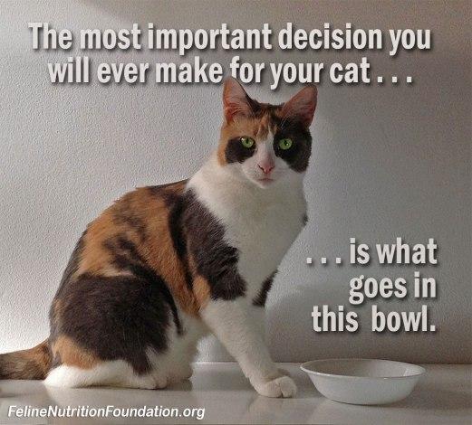 feline_nutrition_image_01