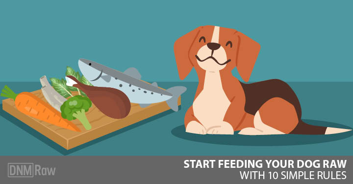 Start-feeding-your-dog-raw-Feature